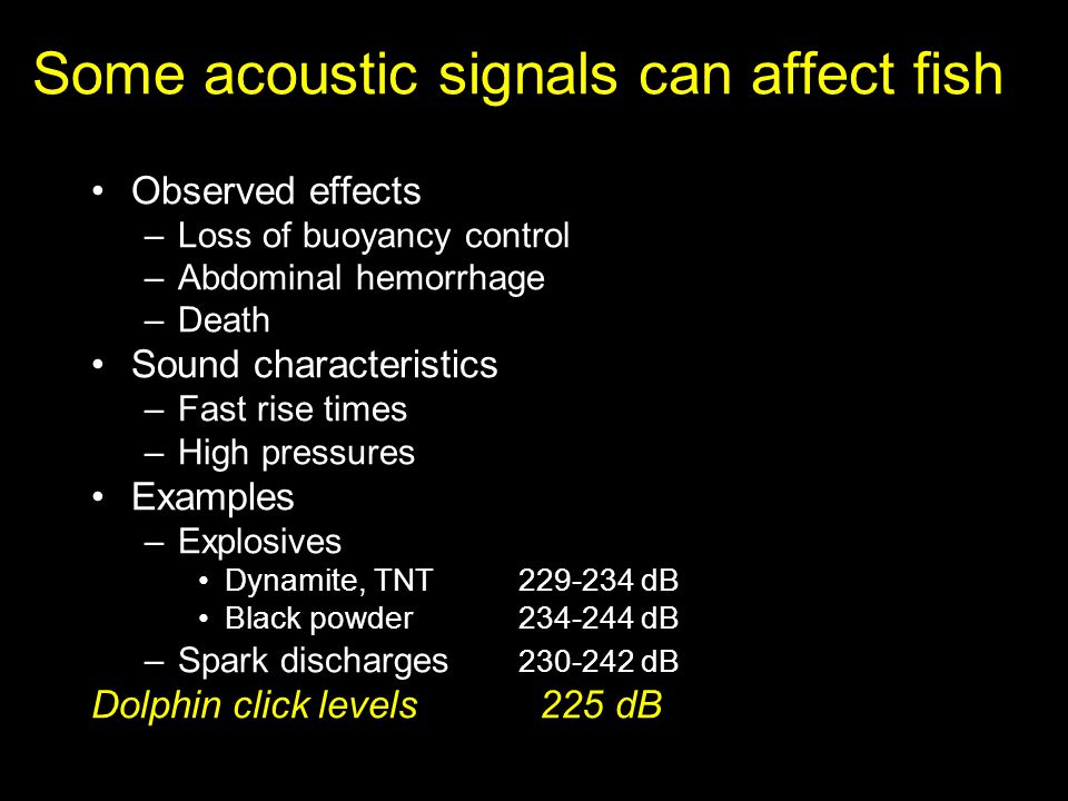Some acoustic signals can affect fish Observed effects –Loss of buoyancy control –Abdominal hemorrhage –Death Sound characteristics –Fast rise times –