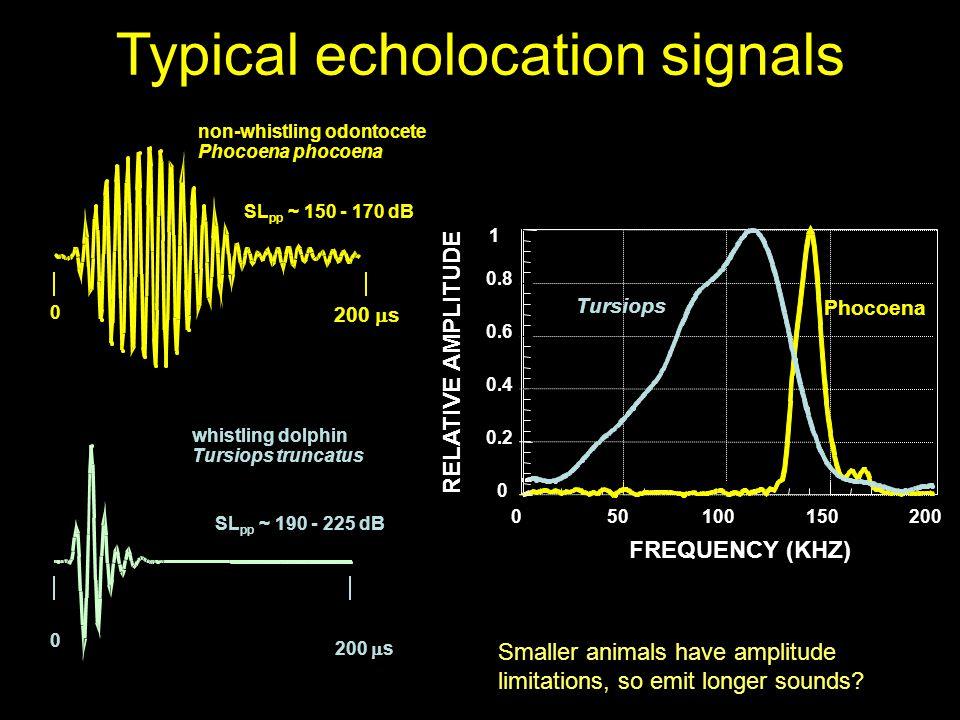 non-whistling odontocete Phocoena phocoena SL pp ~ 150 - 170 dB 0 200  s Typical echolocation signals Smaller animals have amplitude limitations, so