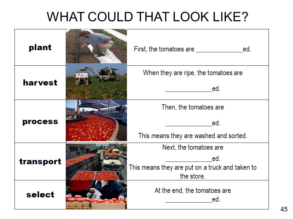 WHAT COULD THAT LOOK LIKE.plant First, the tomatoes are ______________ed.