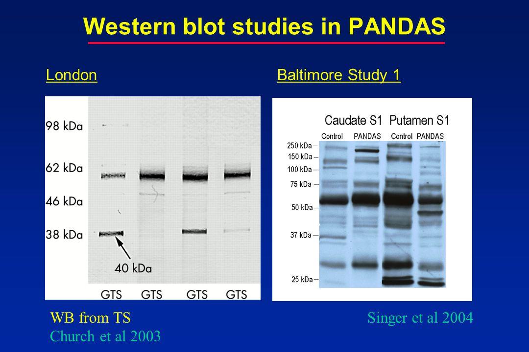Western blot studies in PANDAS Singer et al 2004 LondonBaltimore Study 1 WB from TS Church et al 2003