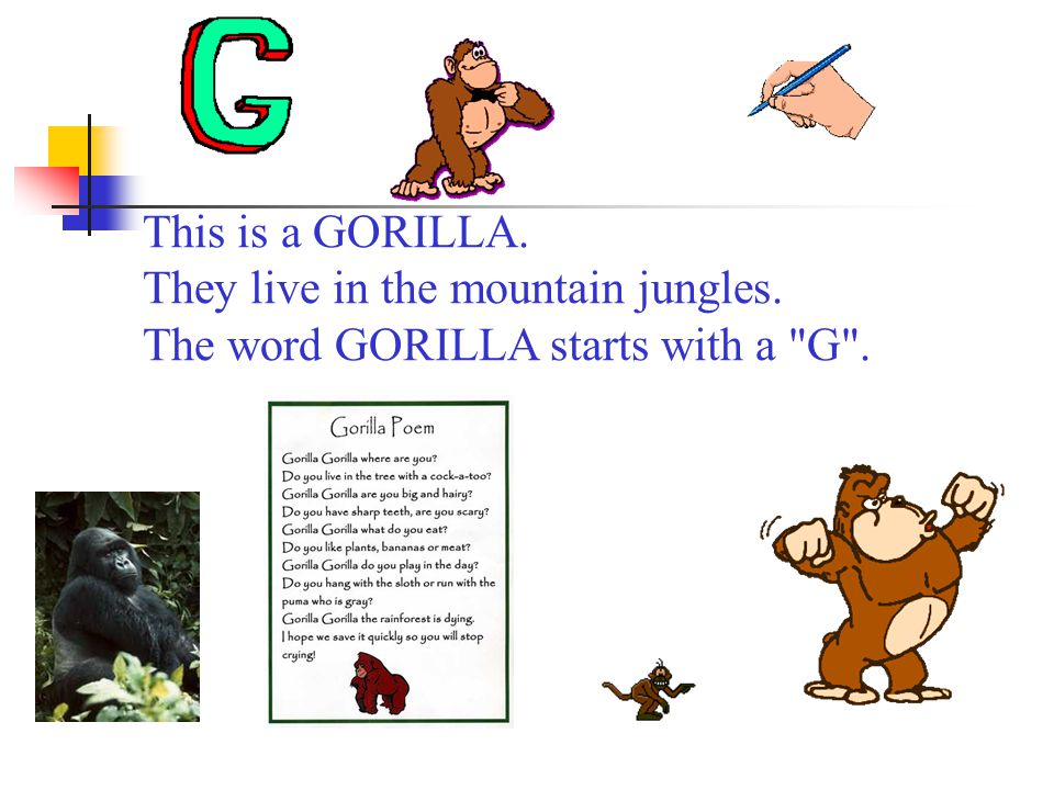 This is a GORILLA. They live in the mountain jungles. The word GORILLA starts with a G .