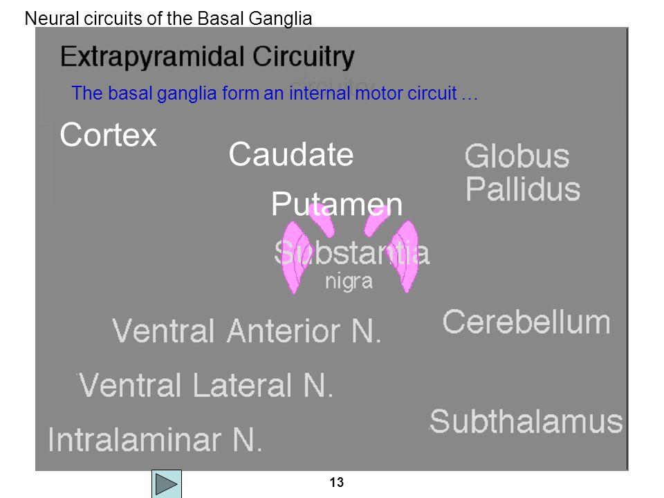 13 circuitry Neural circuits of the Basal Ganglia Cortex Caudate Putamen The basal ganglia form an internal motor circuit …