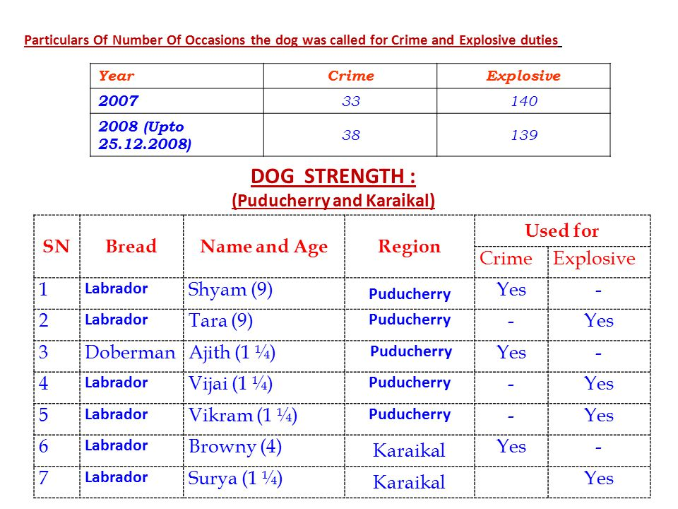 Particulars Of Number Of Occasions the dog was called for Crime and Explosive duties Year CrimeExplosive 2007 33140 2008 (Upto 25.12.2008) 38139 DOG STRENGTH : (Puducherry and Karaikal) SNBreadName and AgeRegion Used for CrimeExplosive 1 Labrador Shyam (9) Puducherry Yes- 2 Labrador Tara (9) Puducherry -Yes 3DobermanAjith (1 ¼) Puducherry Yes- 4 Labrador Vijai (1 ¼) Puducherry -Yes 5 Labrador Vikram (1 ¼) Puducherry -Yes 6 Labrador Browny (4) Karaikal Yes- 7 Labrador Surya (1 ¼) Karaikal Yes