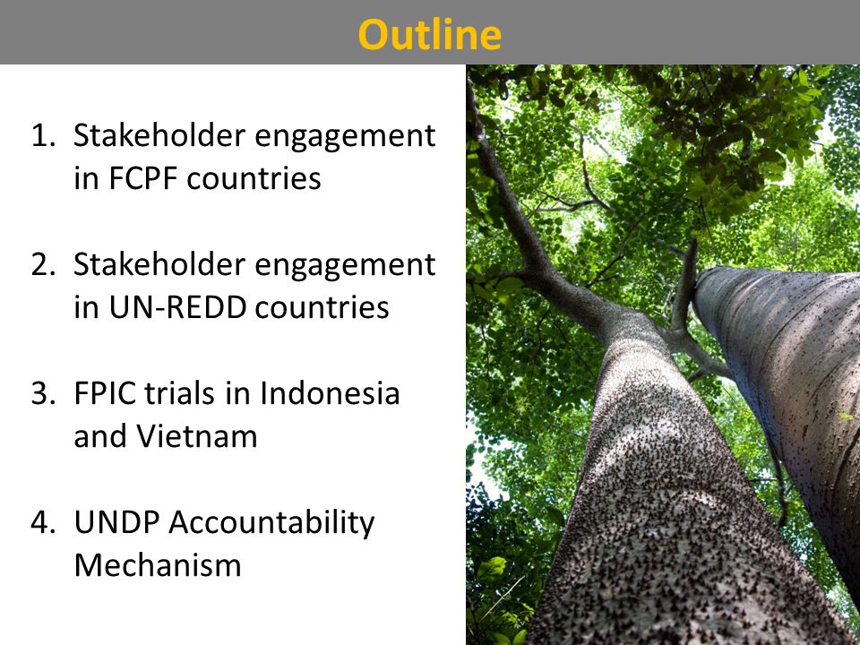 Outline 1.Stakeholder engagement in FCPF countries 2.Stakeholder engagement in UN-REDD countries 3.FPIC trials in Indonesia and Vietnam 4.UNDP Accountability Mechanism