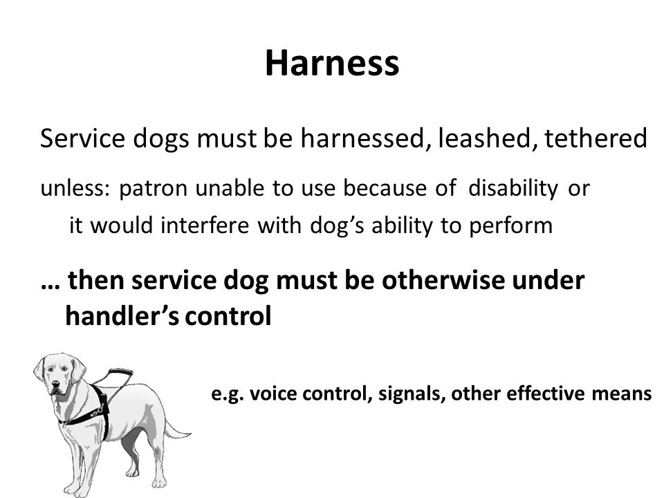Harness Service dogs must be harnessed, leashed, tethered unless: patron unable to use because of disability or it would interfere with dog's ability to perform … then service dog must be otherwise under handler's control e.g.