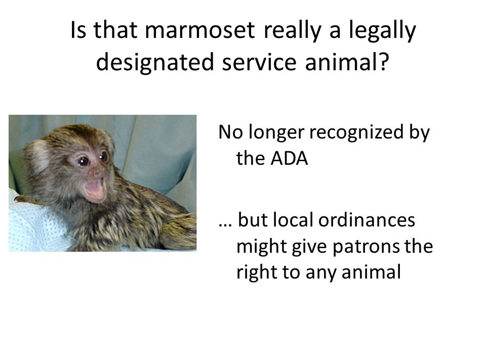 Is that marmoset really a legally designated service animal.