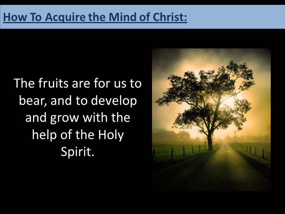 The fruits are for us to bear, and to develop and grow with the help of the Holy Spirit. How To Acquire the Mind of Christ: