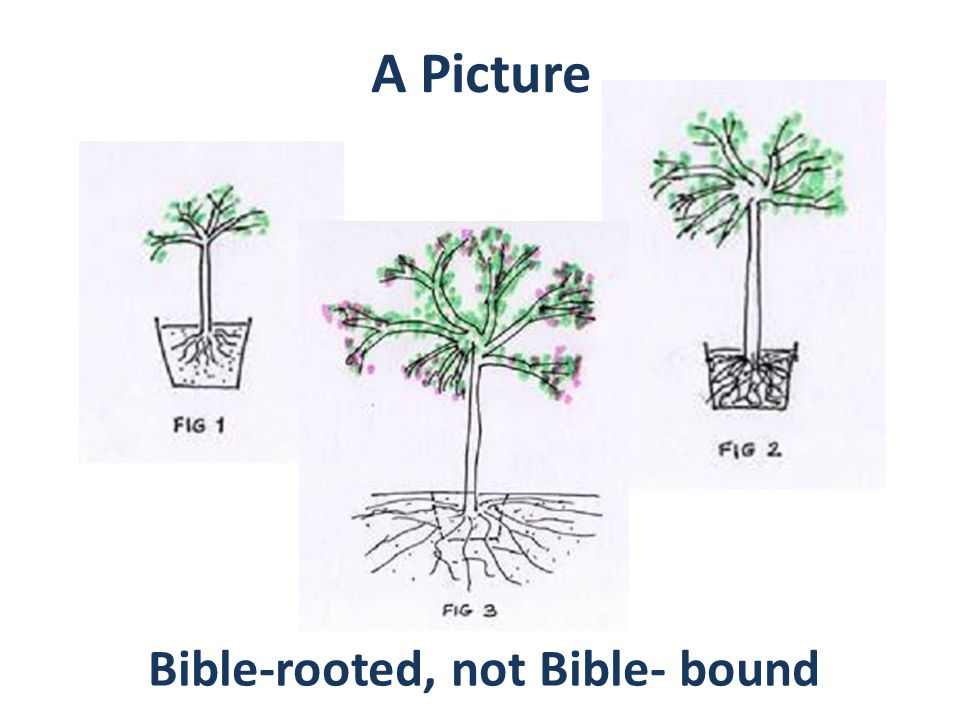 A Picture Bible-rooted, not Bible- bound