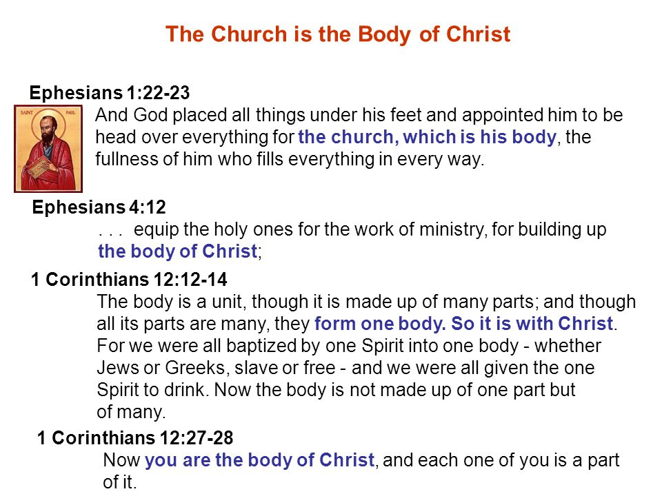 Ephesians 4:12... equip the holy ones for the work of ministry, for building up the body of Christ; The Church is the Body of Christ Ephesians 1:22-23