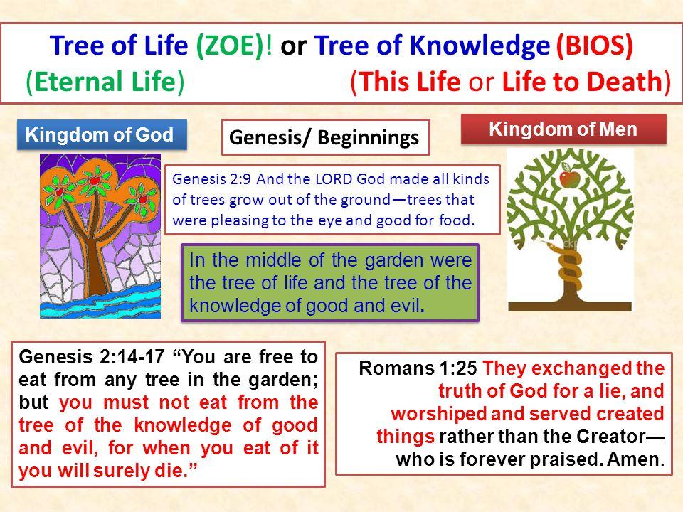 Genesis/ Beginnings Tree of Life (ZOE).