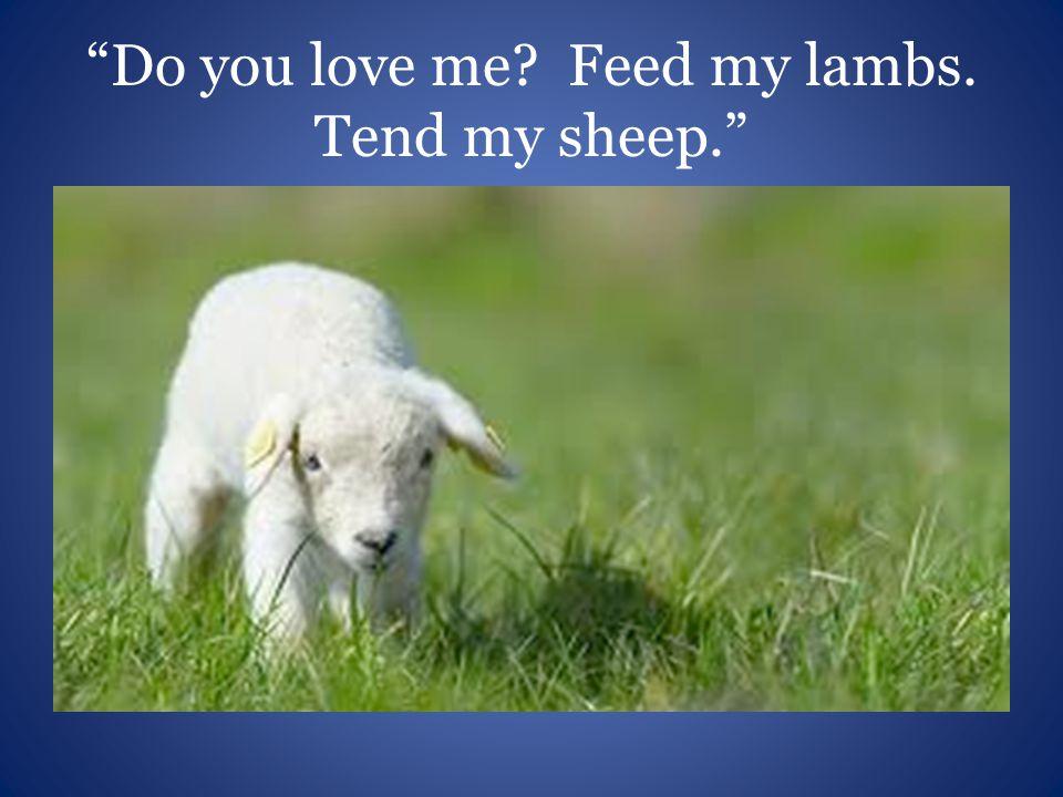 Do you love me? Feed my lambs. Tend my sheep.