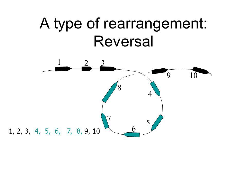 A type of rearrangement: Reversal 1 32 4 10 5 6 8 9 7 1, 2, 3, 4, 5, 6, 7, 8, 9, 10