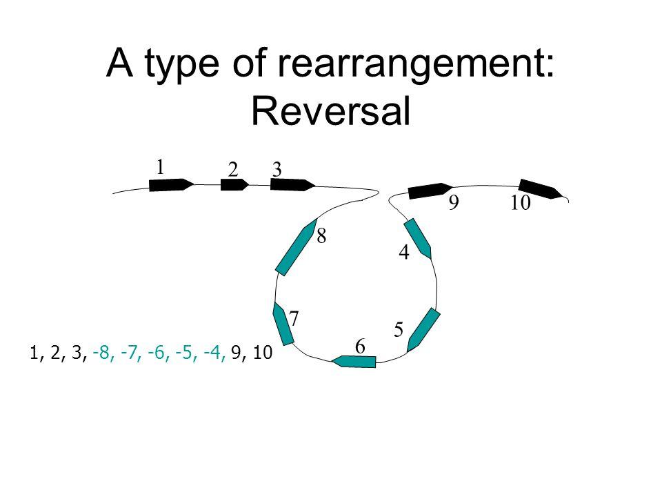 1 32 4 10 5 6 8 9 7 1, 2, 3, -8, -7, -6, -5, -4, 9, 10 A type of rearrangement: Reversal