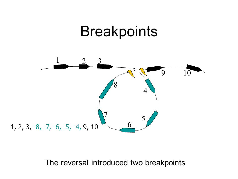 1 32 4 10 5 6 8 9 7 1, 2, 3, -8, -7, -6, -5, -4, 9, 10 The reversal introduced two breakpoints Breakpoints