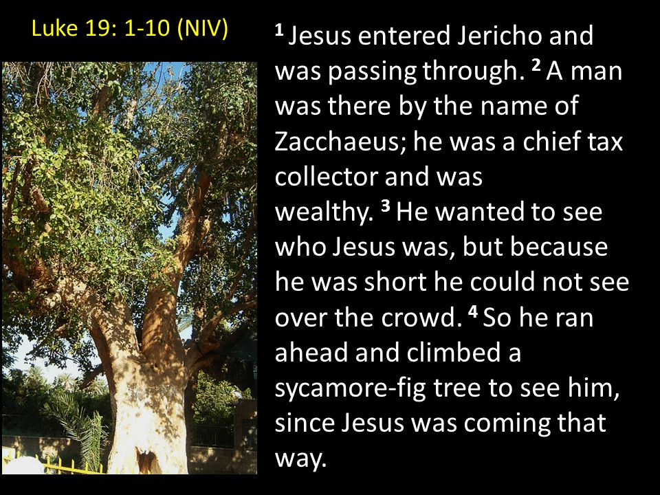 1 Jesus entered Jericho and was passing through.