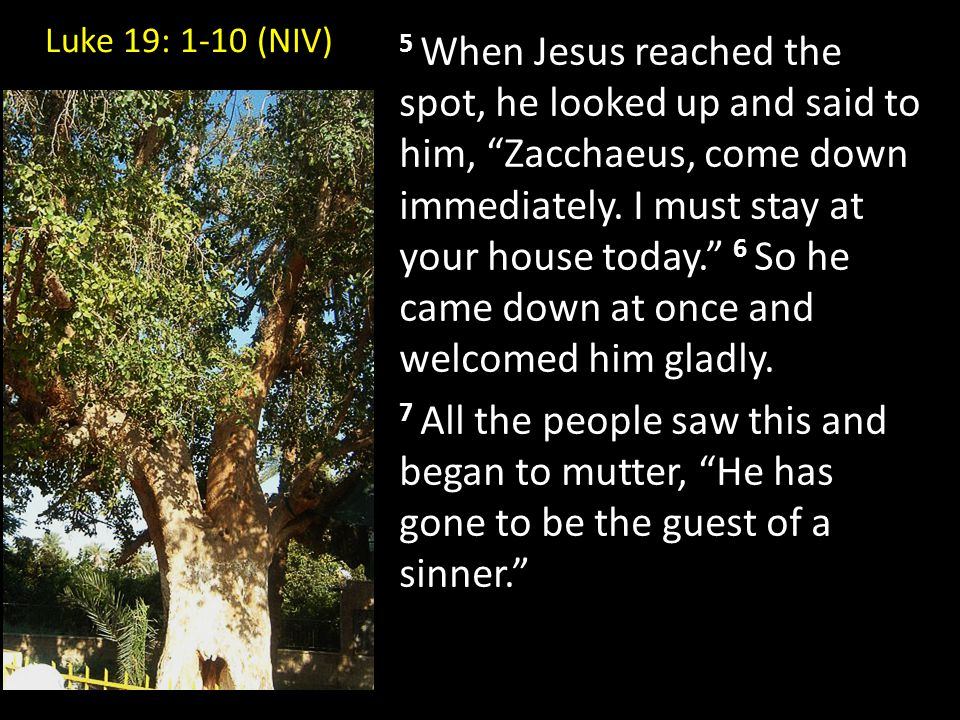 """5 When Jesus reached the spot, he looked up and said to him, """"Zacchaeus, come down immediately. I must stay at your house today."""" 6 So he came down at"""