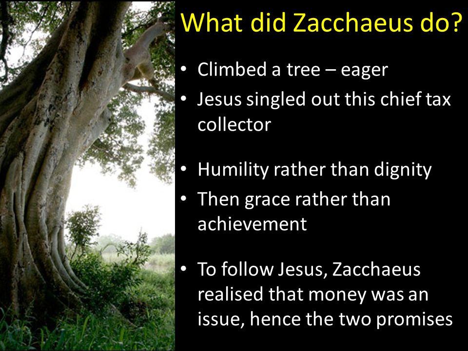 What did Zacchaeus do.