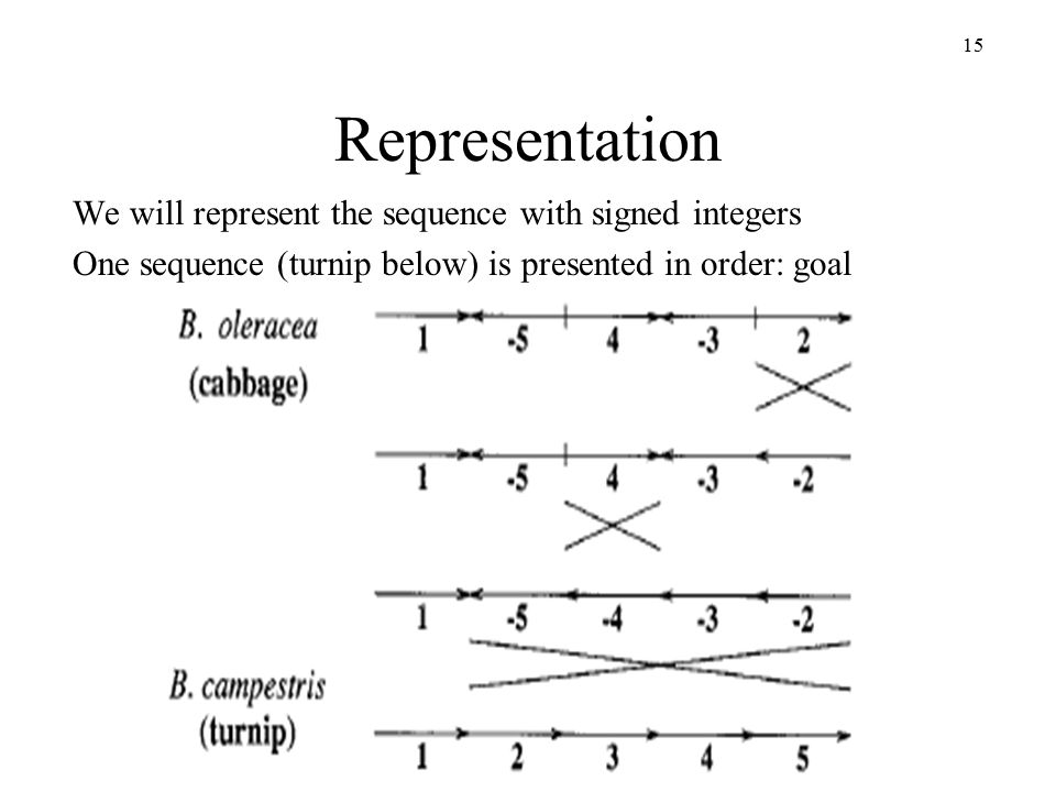 15 Representation We will represent the sequence with signed integers One sequence (turnip below) is presented in order: goal