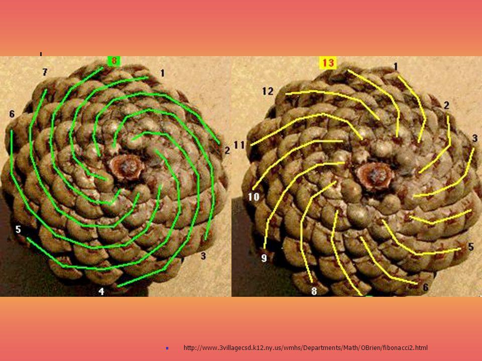 http://www.3villagecsd.k12.ny.us/wmhs/Departments/Math/OBrien/fibonacci2.html