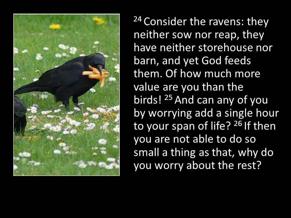 24 Consider the ravens: they neither sow nor reap, they have neither storehouse nor barn, and yet God feeds them. Of how much more value are you than