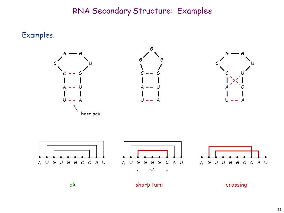 33 RNA Secondary Structure: Examples Examples.