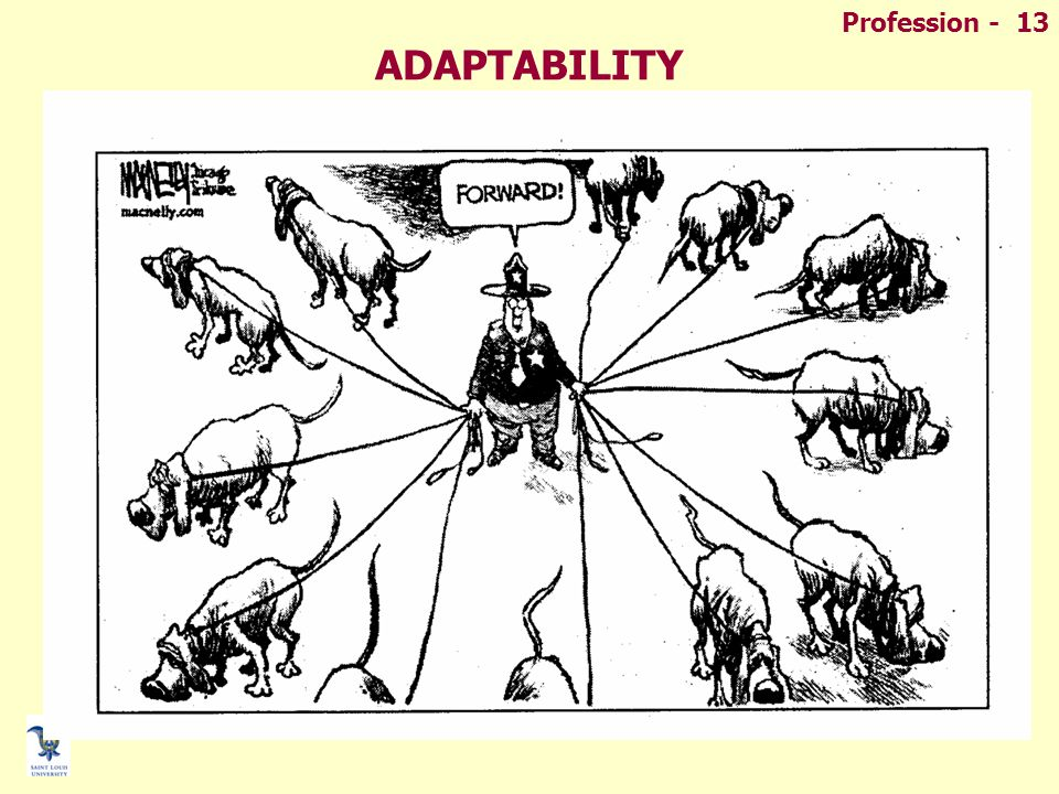 Profession - 13 ADAPTABILITY