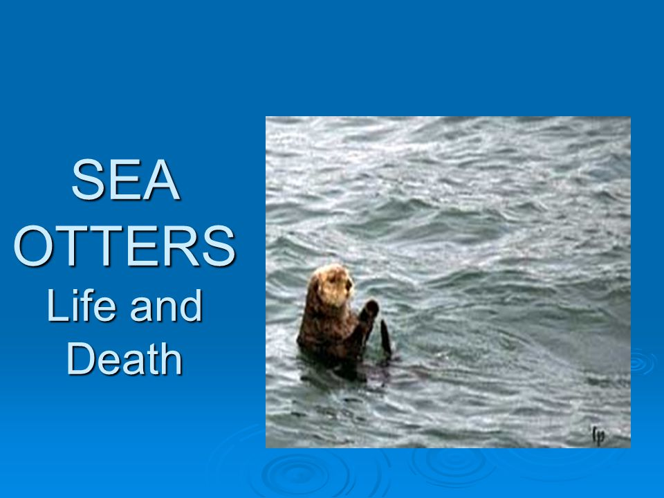 The threat of extinction  Can the sea otter still go extinct?