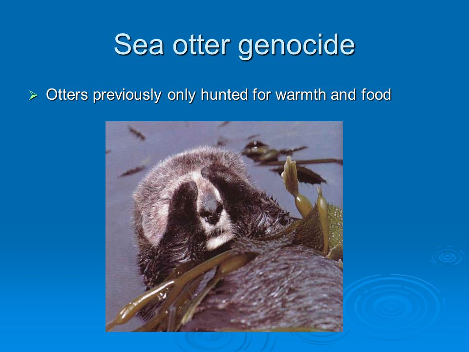 Sea otter genocide  Otters previously only hunted for warmth and food