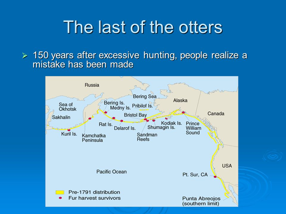 The last of the otters  150 years after excessive hunting, people realize a mistake has been made