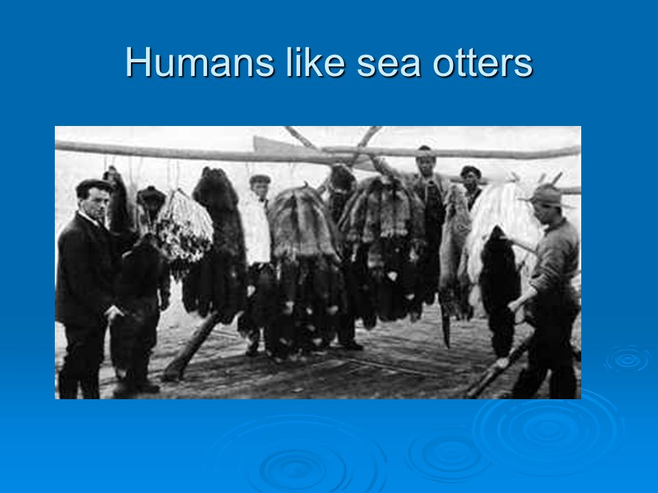 Humans like sea otters