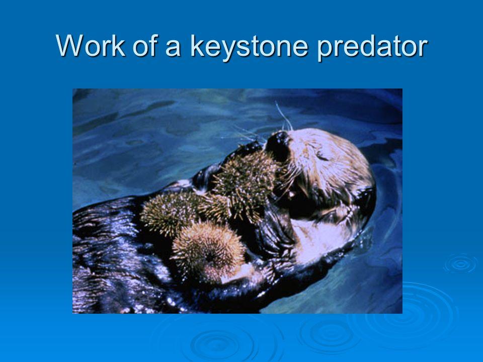 Work of a keystone predator