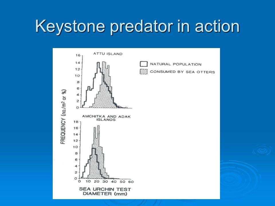Keystone predator in action