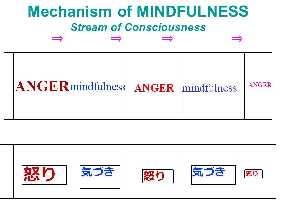 Mechanism of MINDFULNESS Stream of Consciousness ⇒ ⇒ ⇒ ⇒