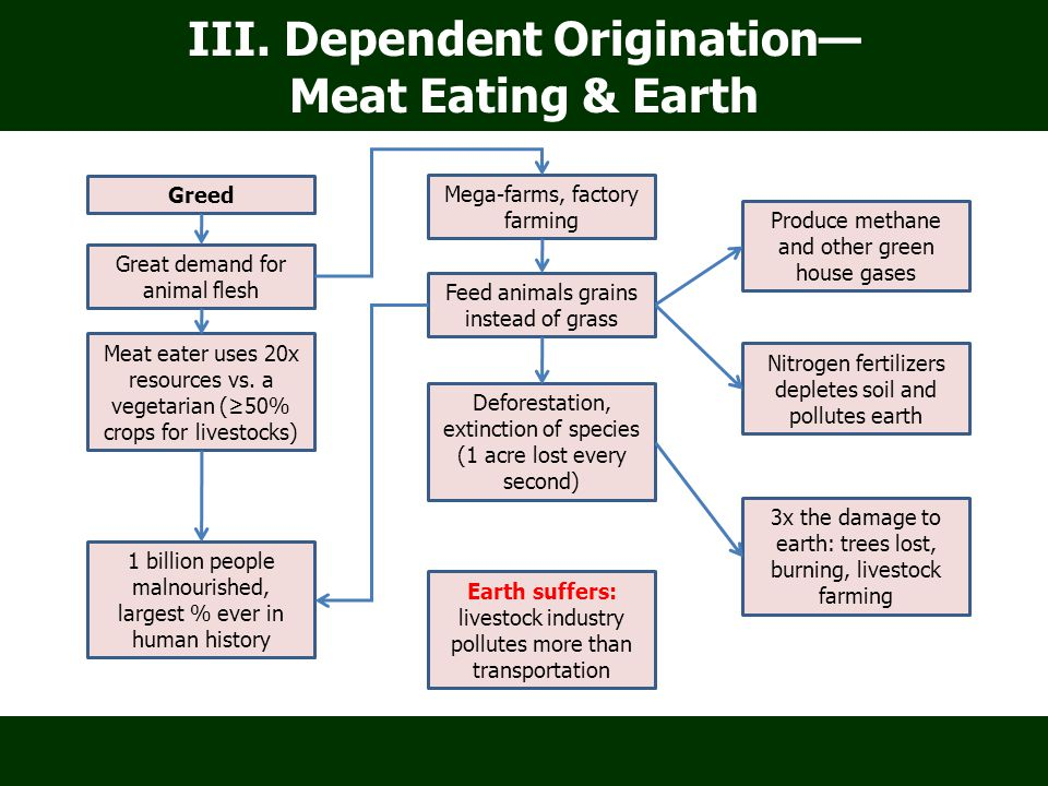 III. Dependent Origination— Meat Eating & Earth Greed Great demand for animal flesh Deforestation, extinction of species (1 acre lost every second) Fe