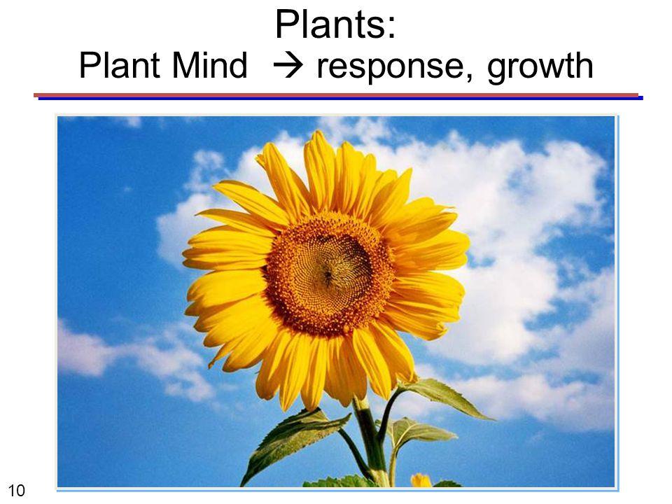 10 Plants: Plant Mind  response, growth