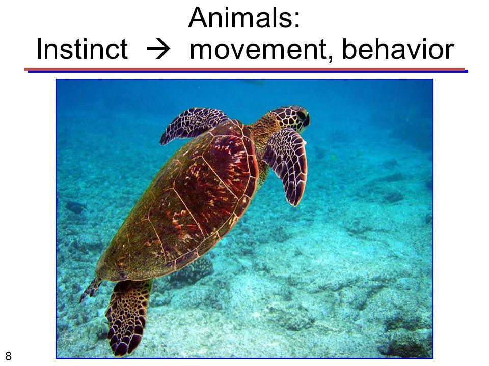 8 Animals: Instinct  movement, behavior