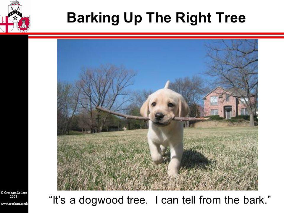 www.gresham.ac.uk © Gresham College 2008 Barking Up The Right Tree It's a dogwood tree.