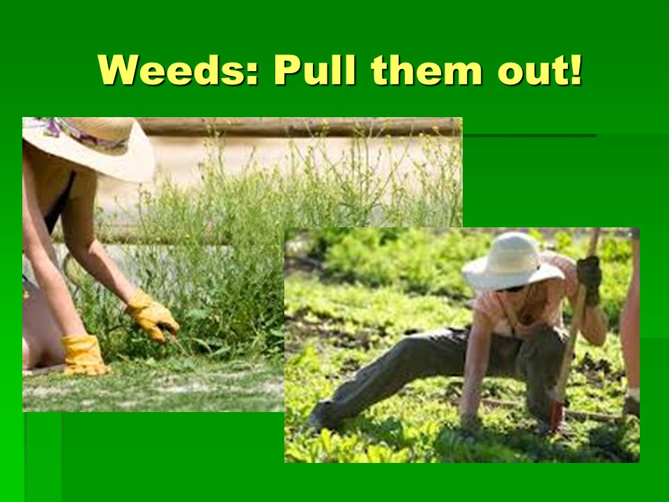 Weeds: Pull them out!