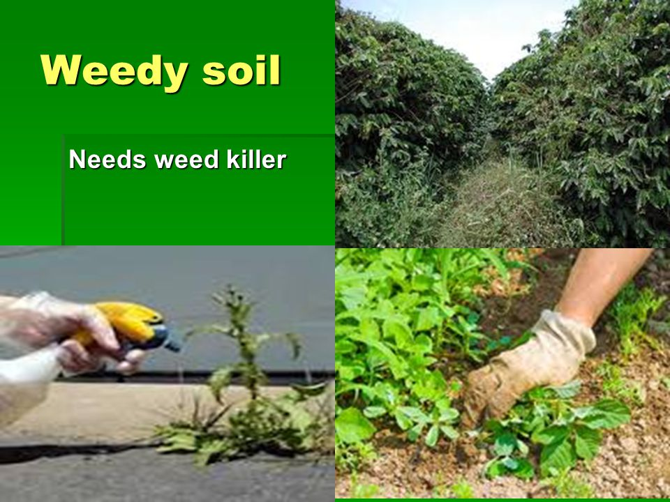 Weedy soil Needs weed killer