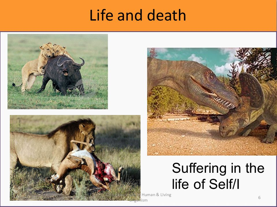 Life and death Suffering in the life of Self/I Mar 2, 20136 Evolution of Self in Human & Living Organism