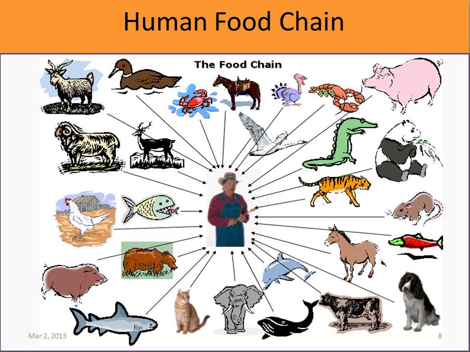 Human Food Chain Mar 2, 20138