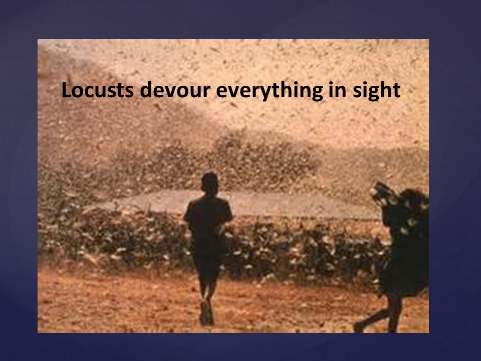 . Locusts devour everything in sight.