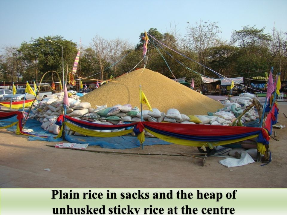 Plain rice in sacks and the heap of unhusked sticky rice at the centre