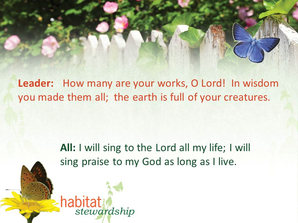 Leader: How many are your works, O Lord.