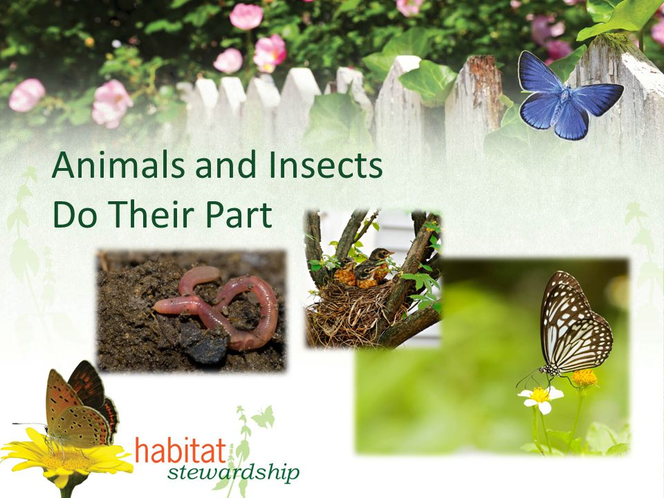 Animals and Insects Do Their Part
