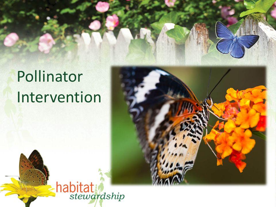 Pollinator Intervention