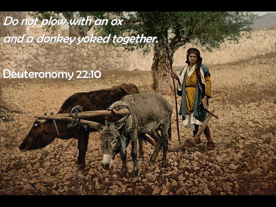 Do not plow with an ox and a donkey yoked together. Deuteronomy 22:10