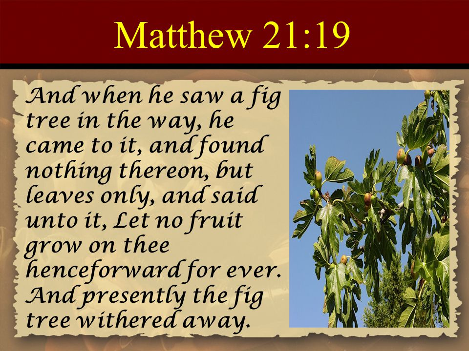 Matthew 21:19 And when he saw a fig tree in the way, he came to it, and found nothing thereon, but leaves only, and said unto it, Let no fruit grow on