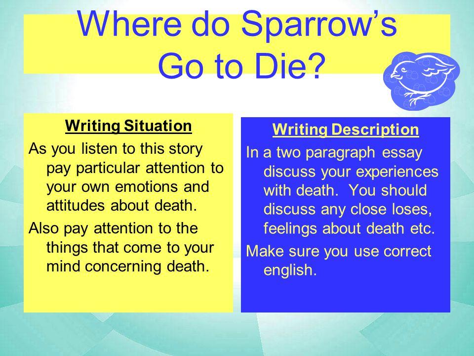 Where do Sparrow's Go to Die.