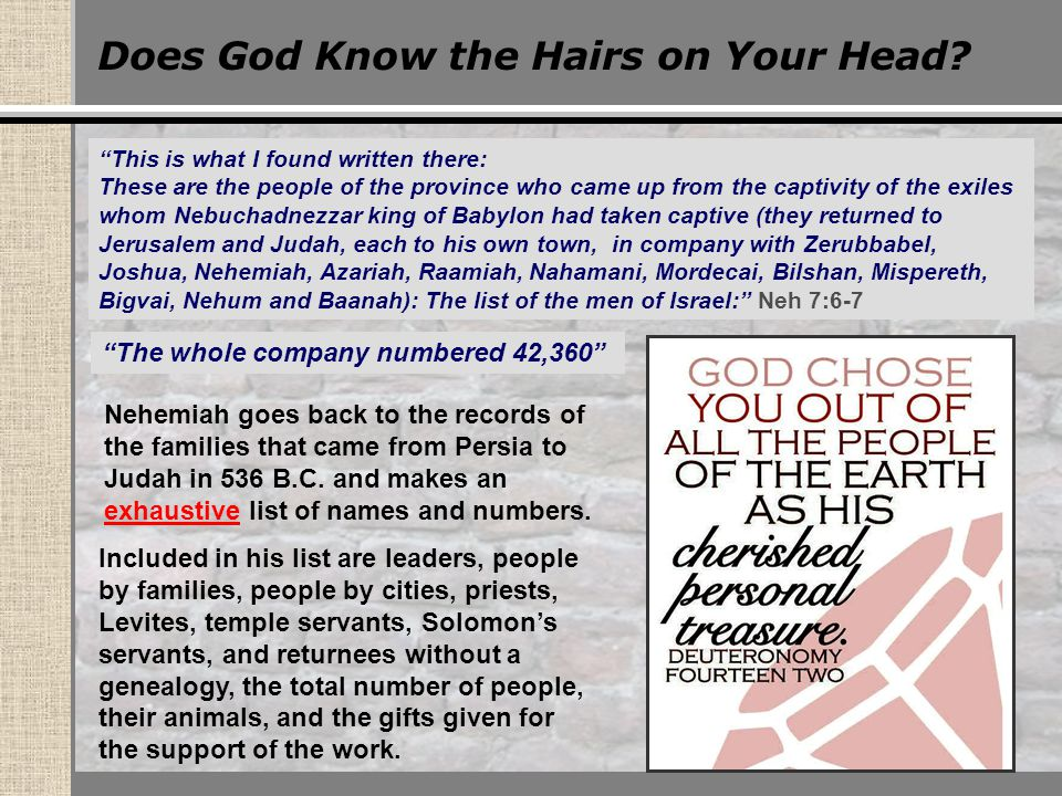 Does God Know the Hairs on Your Head.